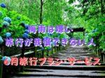 紫陽花の花とお寺の山道の写真