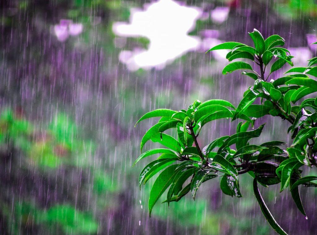 雨にうたれる植物の写真